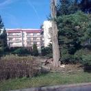 kácení Populus nigra Italica (Liberec)