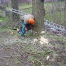 kácení vzrostlích jasanů podél komunikace (Šimonovice)