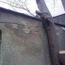 kácení javorů narušujících garáž (Liberec - Kunratická)