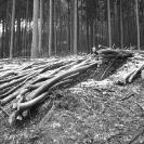 Prořezávka, úklid dřevní hmoty